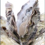oysters may 150x150 Top 10 foods or drinks that strengthen tooth enamel naturally