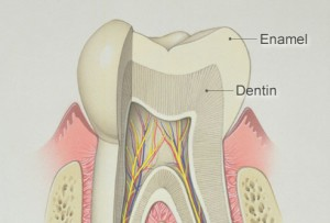phototake rm photo of tooth illustration 300x203 Top 10 foods or drinks that strengthen tooth enamel naturally