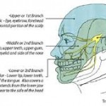 The 5th Cranial Nerve