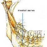c12 MentalNerve 150x150 Mental nerve