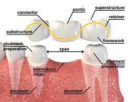 Edentulous mouth anatomy